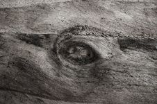 Free Wood Texture Royalty Free Stock Photography - 14895727