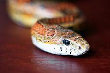 Free An Orange Corn Snake On Red Leather Stock Photos - 14896123