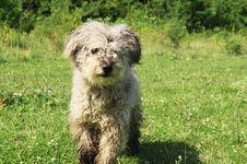 Free Dog. Stock Photography - 14896162