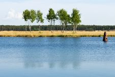 Free Birches On River Bank Stock Photo - 14896280