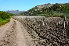 Free Beautiful Vineyards Of Crimea Stock Images - 14897854