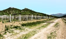 Free Beautiful Vineyards Of Crimea Stock Photos - 14897873