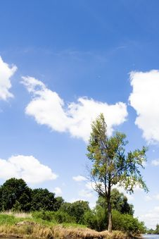 Free Tree Under The Blue Sky, Landscape Royalty Free Stock Image - 14899296