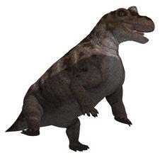 Free Dinosaur Keratocephalus Stock Photos - 14899923