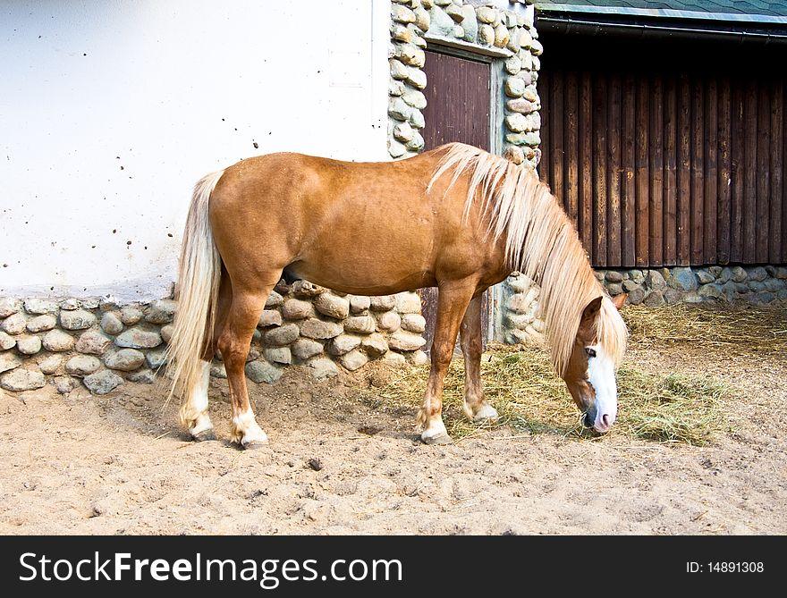 Feeding horse