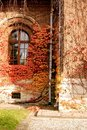 Free Red Ivy On Wall Royalty Free Stock Photography - 1498487