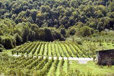 Free Vineyard Stock Photos - 1492273