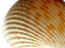 Free Sea Shell Stock Photography - 1492552
