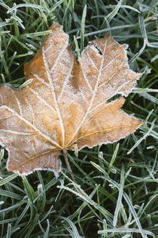 Leaf With Frost Stock Images