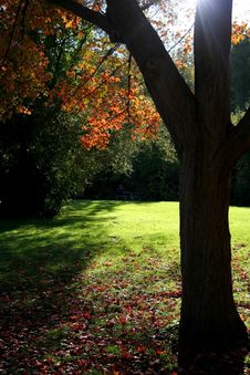 Free Tree Whisper Royalty Free Stock Photos - 1493218
