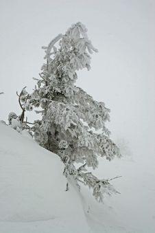 Free Winter Stock Photo - 1494110