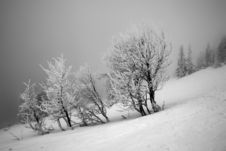 Free Winter Stock Images - 1494114