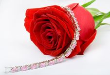 Free Red Rose And Jewel Stock Photos - 1494213