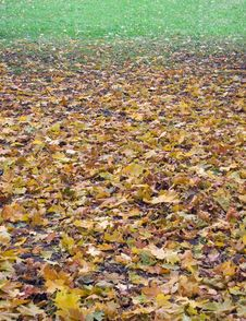 Free Autumnal Gradient (2) Royalty Free Stock Photos - 1494738