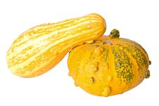 Free Pumpkins Stock Photography - 1495382