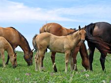 Gorgeous Young Horse Colt Stock Images