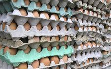 Free Eggs Stock Photo - 1498340