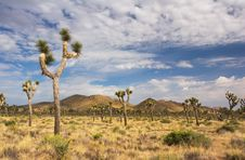 Free Joshua Tree National Park Stock Photo - 1498520