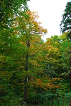 Free Forest In The Fall Royalty Free Stock Photos - 1499528