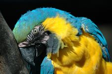 Free Macaw Stock Photography - 1499622