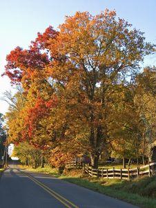 Free Autumn Road Royalty Free Stock Photos - 1499898