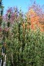Free Autumn, Adelaide Hills Stock Photos - 14905513