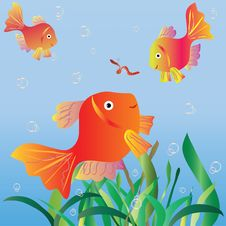 Free Fishes Royalty Free Stock Photography - 14902267