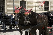 Carriage Horses In Vienna Stock Photo