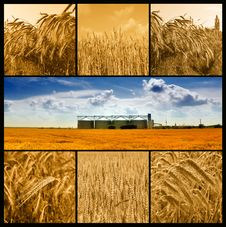 Free Agriculture Royalty Free Stock Photography - 14906117