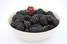 Free Blackberry Royalty Free Stock Photo - 14906545