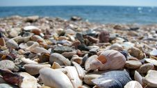 Free Shells And Stones Royalty Free Stock Photo - 14906805