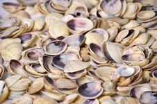 Free Shell Background Stock Image - 14907111