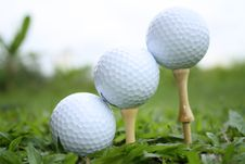 Golf Balls On Tees Royalty Free Stock Images