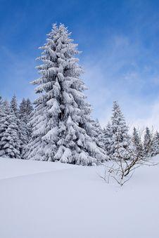 Free Majestic Winter Landscape At Mountain Kopaonik Stock Photos - 14908823