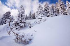 Free Winter Landscape At Kopaonik Mountain Stock Image - 14908861