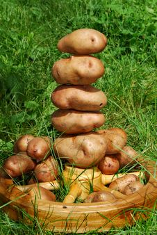Free Still Life Of Potatoes Royalty Free Stock Images - 14909309