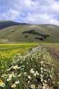Free Castelluccio Di Norcia Royalty Free Stock Photo - 14915405
