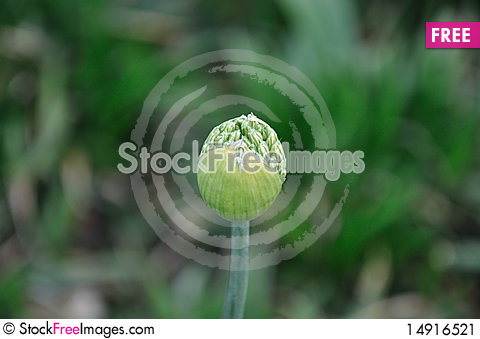 Free Green Flower Bud Stock Image - 14916521