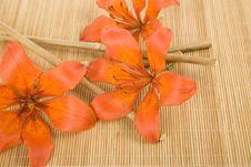 Free Orange Tiger Lily Stock Image - 14910371