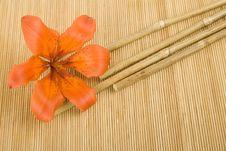 Free Orange Tiger Lily Royalty Free Stock Photo - 14910425