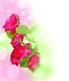 Free Red Roses And Bokeh Stock Photo - 14910520