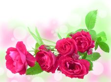 Free Romantic Roses Royalty Free Stock Photography - 14910527