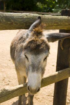 Free Donkey Stock Images - 14912264