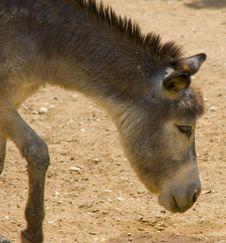Free Donkey Royalty Free Stock Photos - 14912628