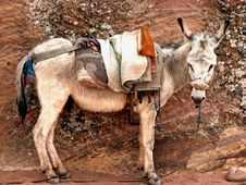 Free Donkey In Petra, Jordan Royalty Free Stock Photography - 14913087