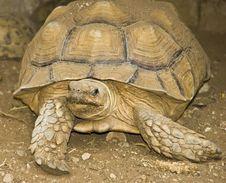 Free Giant Turtle Stock Photo - 14913110