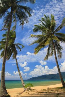 Free Swaying Coconut Trees Royalty Free Stock Images - 14913939