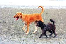 Free Dog Walk Stock Images - 14914184