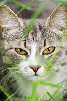 Free Cat In The Grass Stock Photos - 14914223