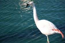 Free Flamingo In The Water Royalty Free Stock Images - 14914469